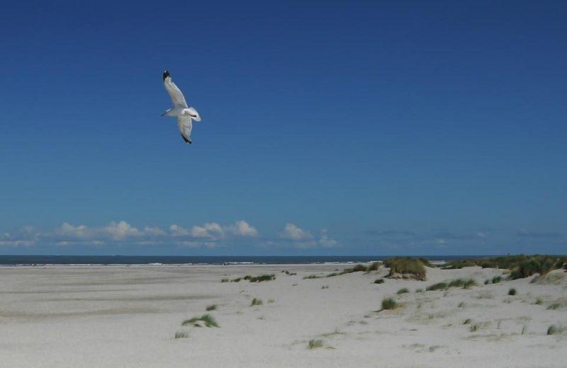 ビーチを飛ぶカモメ