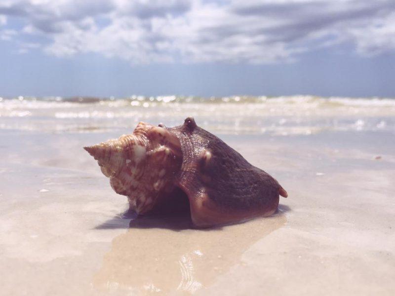 ビーチと貝殻